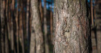 Картинки ствол дерева (65 фото)