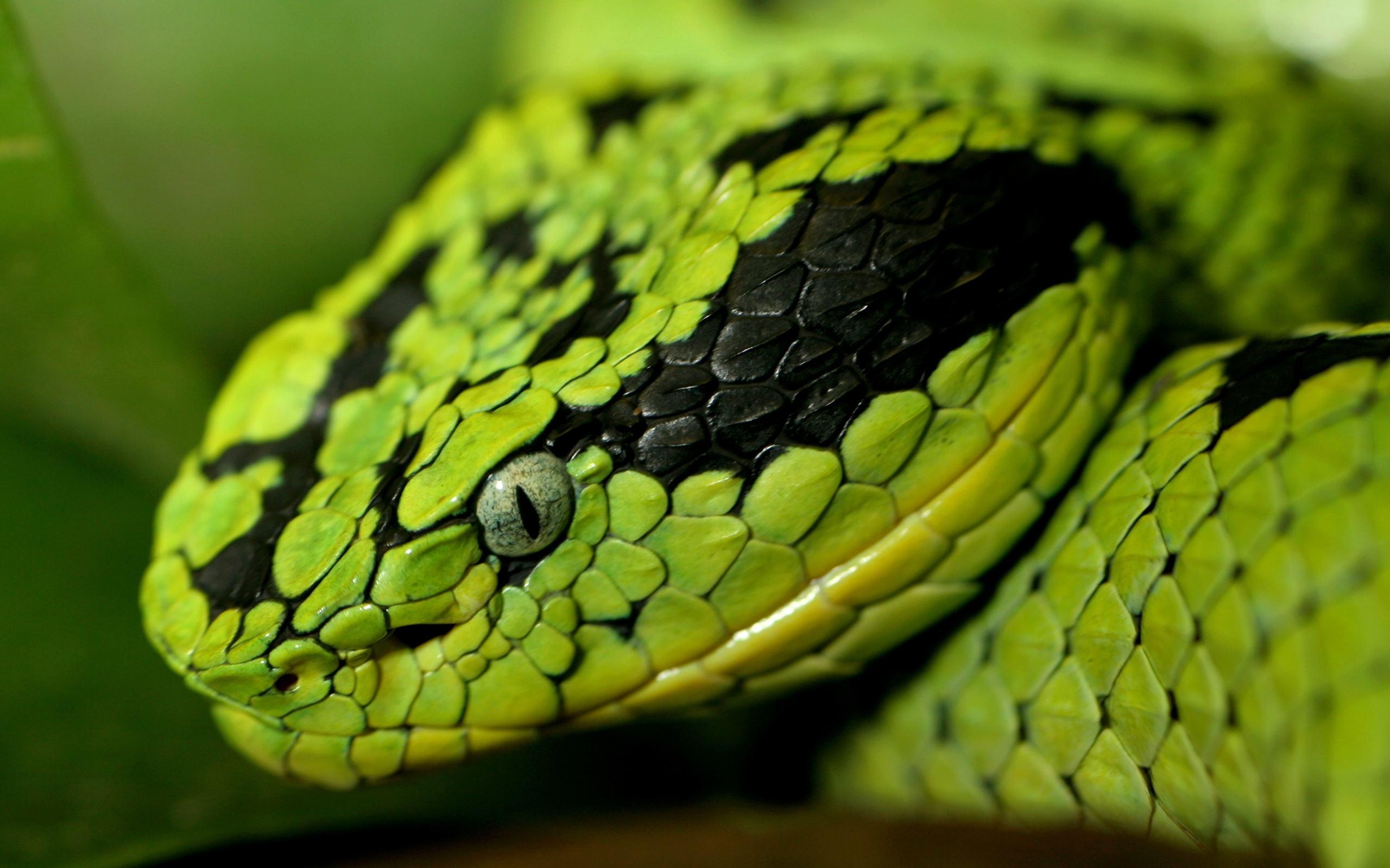 шутки картинки змей для рабочего стола на весь экран подарок всем