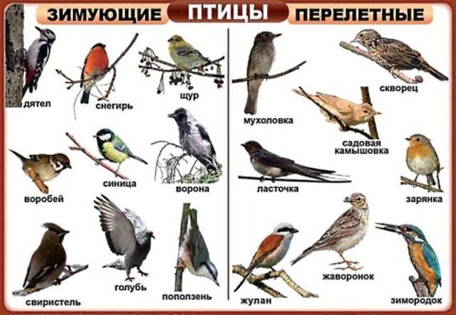 птицы с фото с названием