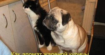 Смешные картинки кошек и собак (30 фото)