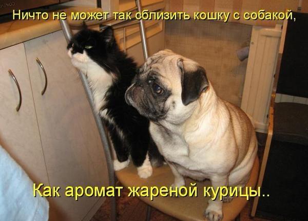 Смешные картинки кошек и собак (30 фото) ???? Прикольные картинки и юмор