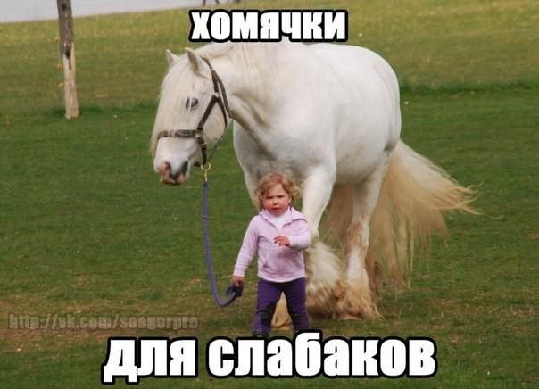 Картинки лошадей с надписями