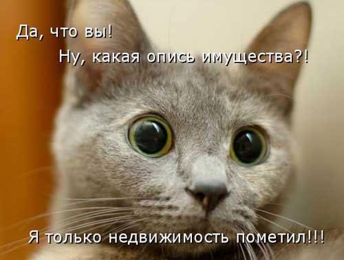 смотреть смешные картинки с надписями до слез