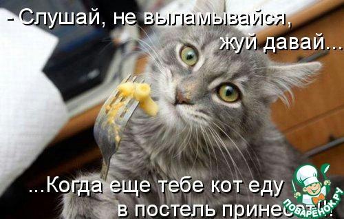 картинки с кошками с надписью