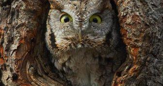 Картинки смешная сова (35 фото)
