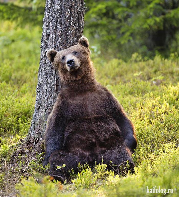 Прикол с медведем картинка, подруге открытки