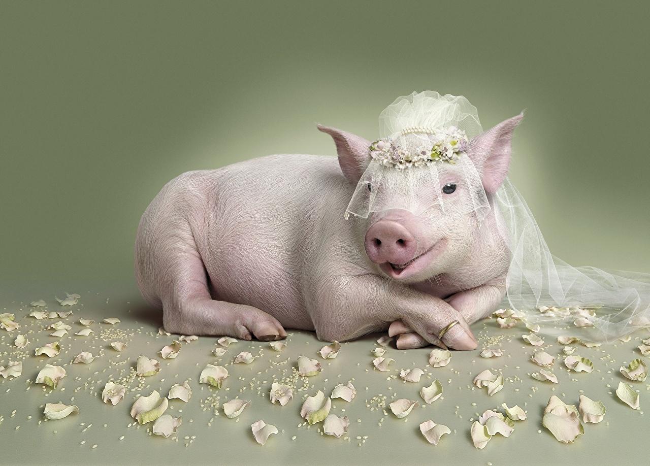 картридж жирная свинья смешные картинки черно-белые картинки