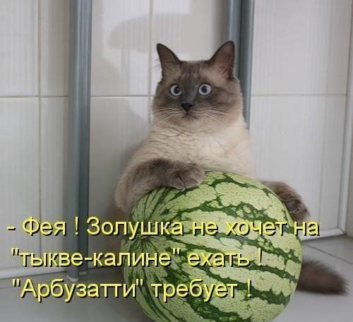 Смешные поздравления с котами фото 171
