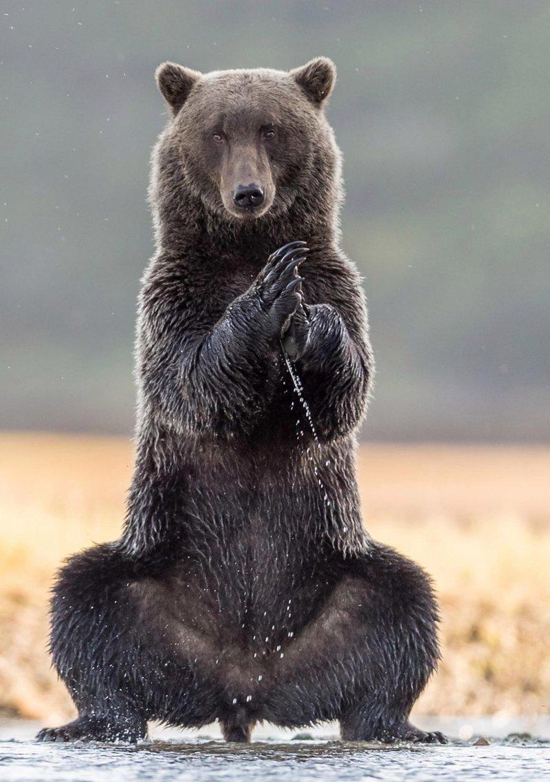 фото смешного медведя девушкам пропорциональной