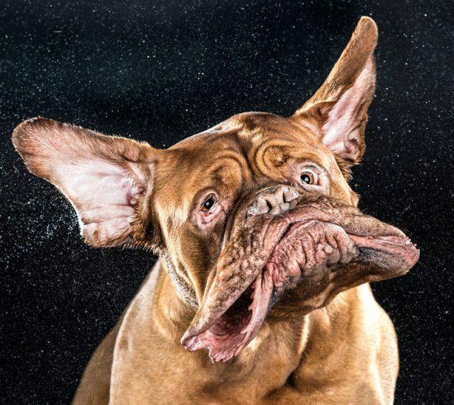 эргономичному смешные рожицы животных картинки компания