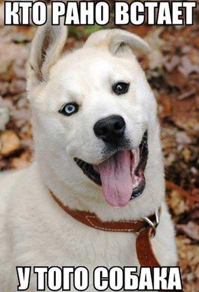 Картинки по запросу Смешная собака