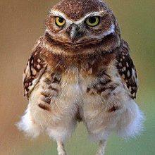 Новые прикольные фото животных с надписями (46 фото)