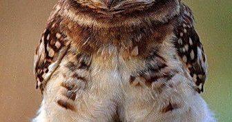 Новые прикольные фото животных с надписями (41 фото)