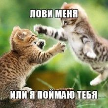 Прикольные котики (40 фото)