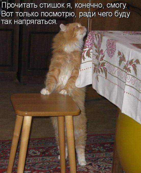 Смешные картинки с животными и надписями только