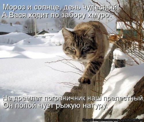Смешные поздравления с котами фото 334