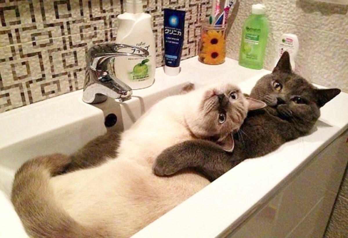 Приколы котов в картинках фото