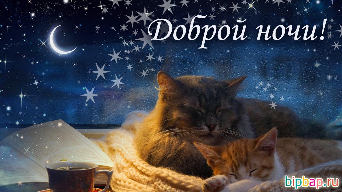 Прикольные картинки спокойной ночи с животными