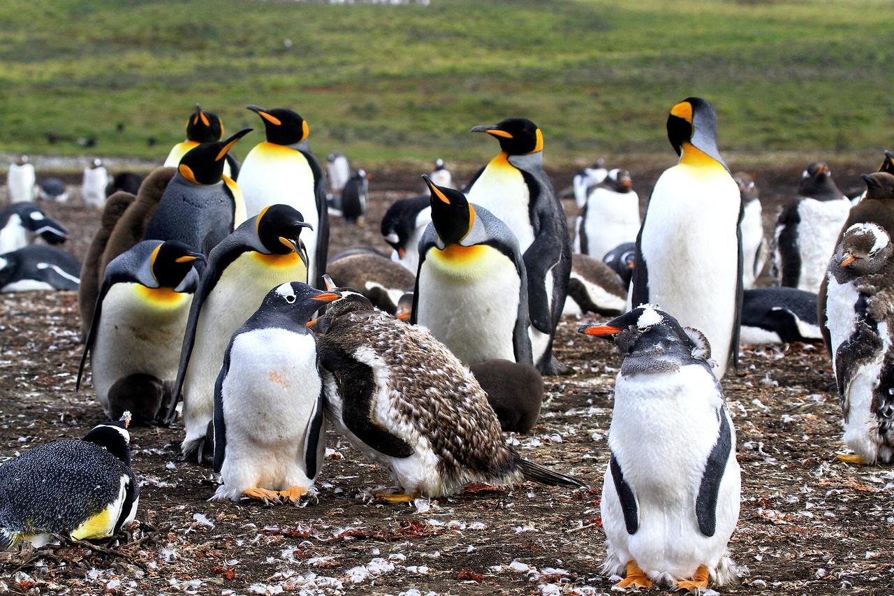 так было редкие пингвины фото что пожар