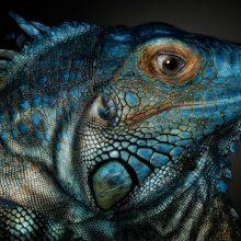 Красивые картинки диких животных (35 фото)
