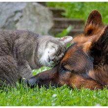 Красивые картинки кошек и собак (35 фото)