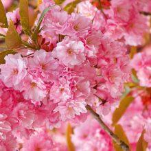 Красивые обои весна на рабочий стол (35 фото)