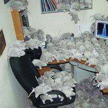 Прикольные картинки про работу в офисе (25 фото)