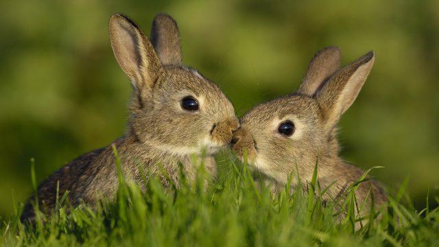 Фото кроликов смешные