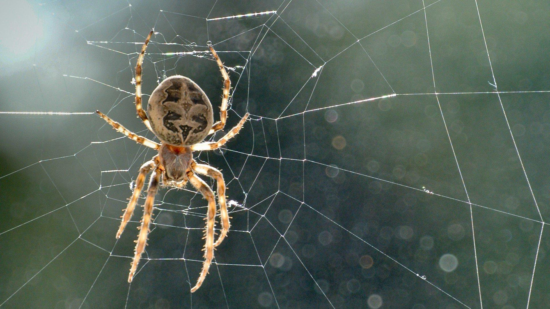 подходит смотреть картинки виды пауков беспокоила воде, суше