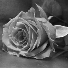 Красивые черно-белые картинки на рабочий стол (35 фото)