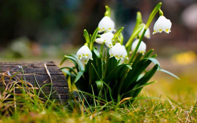 Ранняя весна картинки