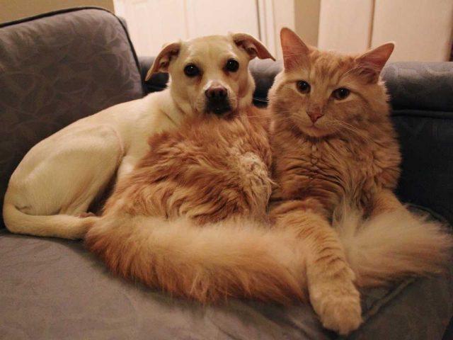 Красивые картинки кошек и собак (35 фото) 🔥 Прикольные ...