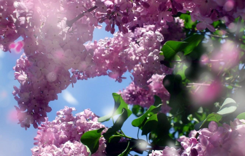 скорой большие картинки весна на весь экран или серая