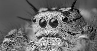Красивые картинки пауков на рабочий стол (35 фото)
