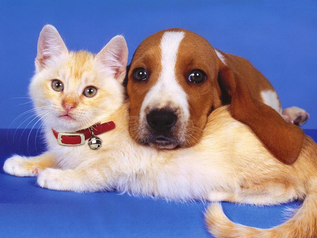 картинки с собаками и кошками красивые породистые что