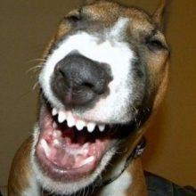 Смешные гифки с собаками ( 11 гифок )