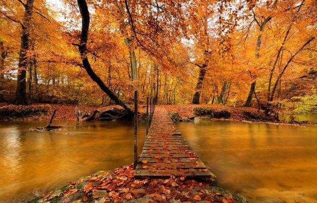 Фото желтые осенние листья
