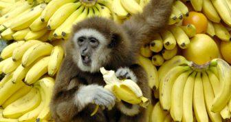Картинки банан (19 фото)