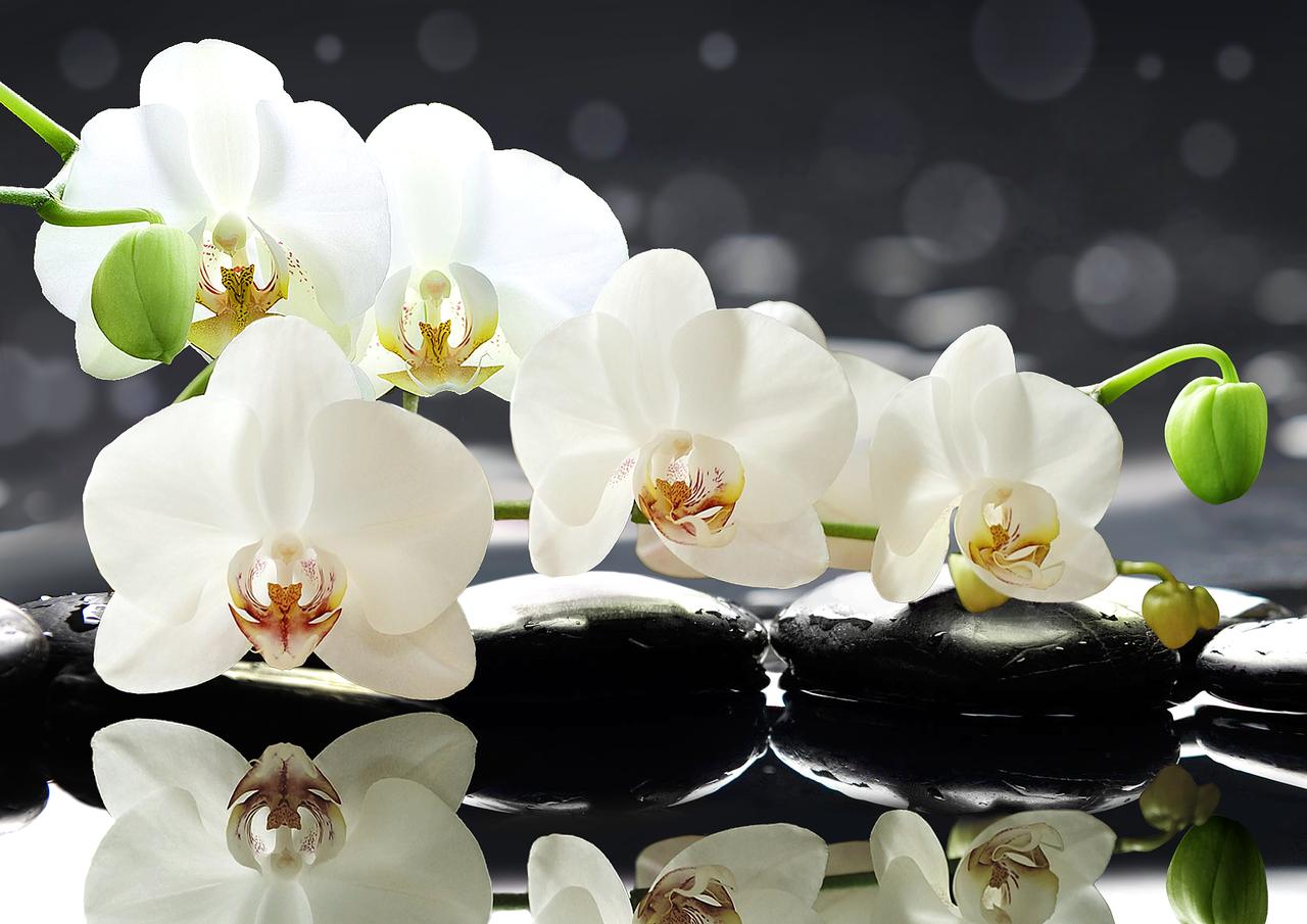 орхидеи фото в высоком разрешении материальному