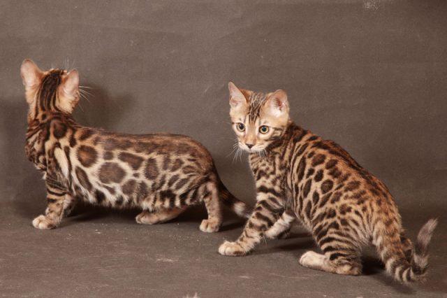 Найди кота: хитрые усатые-полосатые, которых невозможно