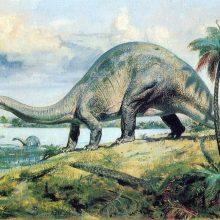 Картинки бронтозавр (15 фото)