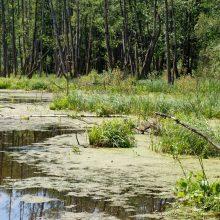 Картинки болото (30 фото)
