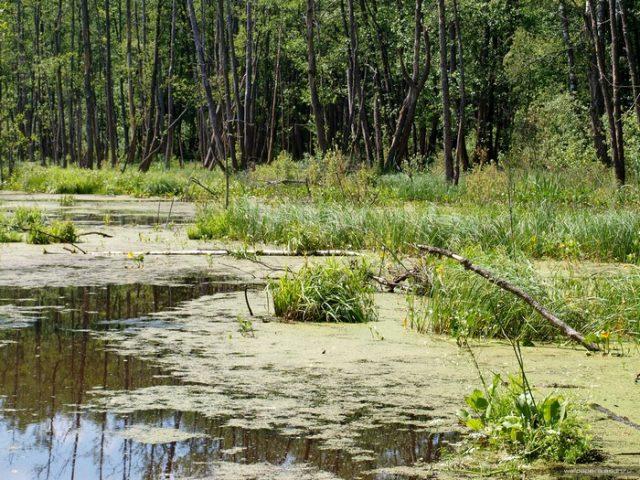 фото болото