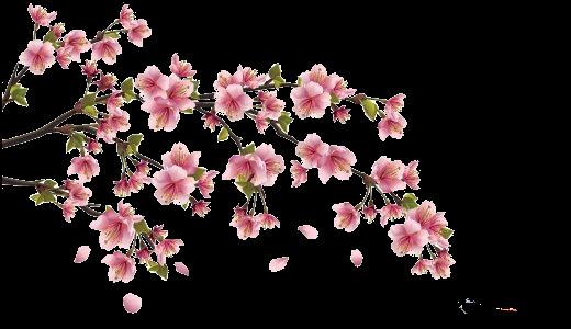 Картинки ветка сакуры (31 фото) 🔥 Прикольные картинки и юмор  Цветущая Сакура Png