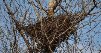 Картинки для детей гнездо (19 фото)