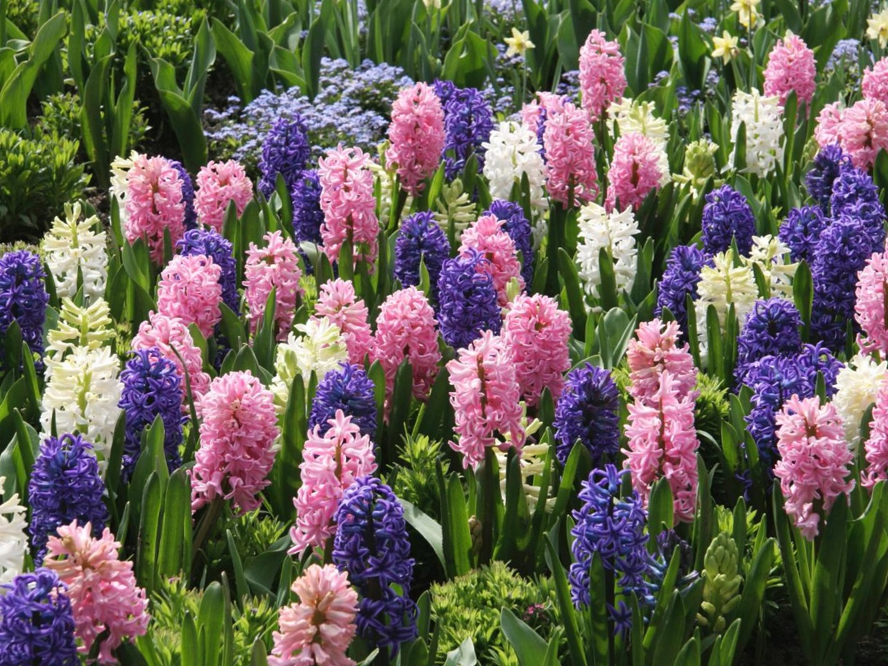Декор пластиковых горшков для цветов фото