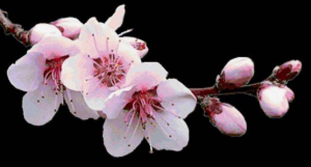 Картинка орхидея нарисованная