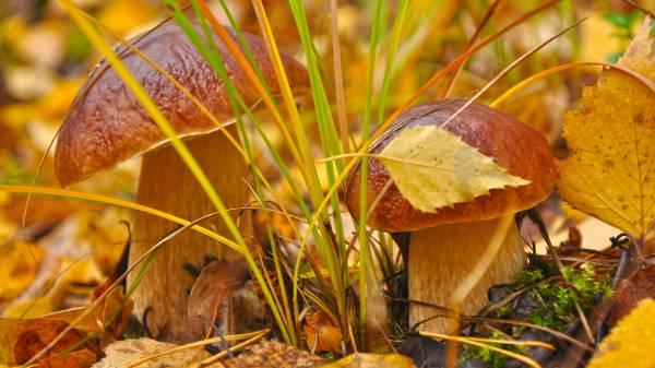 Картинки грибы в лесу (28 фото) 🔥 Прикольные картинки и юмор