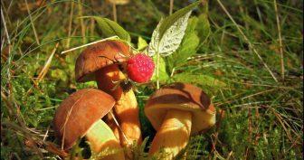 Картинки грибы в лесу (28 фото)