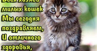 Красивые картинки с Днем кошек 2019 (32 фото)